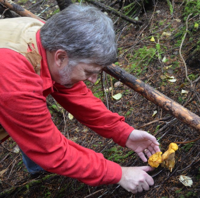 Grouse hunting was a bust, but Phil McCorkle and I scored some tasty chanterelles during a fall foray into the woods.