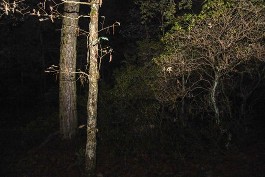 Trees are surrounded by deep darkness in the Pocomoke Forest on Saturday, Oct 27, 2018. The forest is rumored to be one of the most haunted places in Maryland.