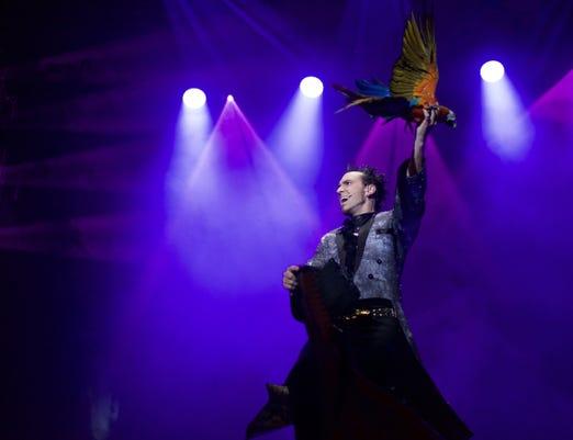 David Davinci Thrillusionist Macaw