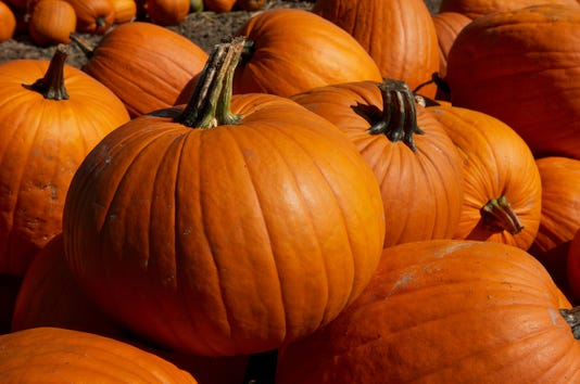 Pumpkin Close Up 2