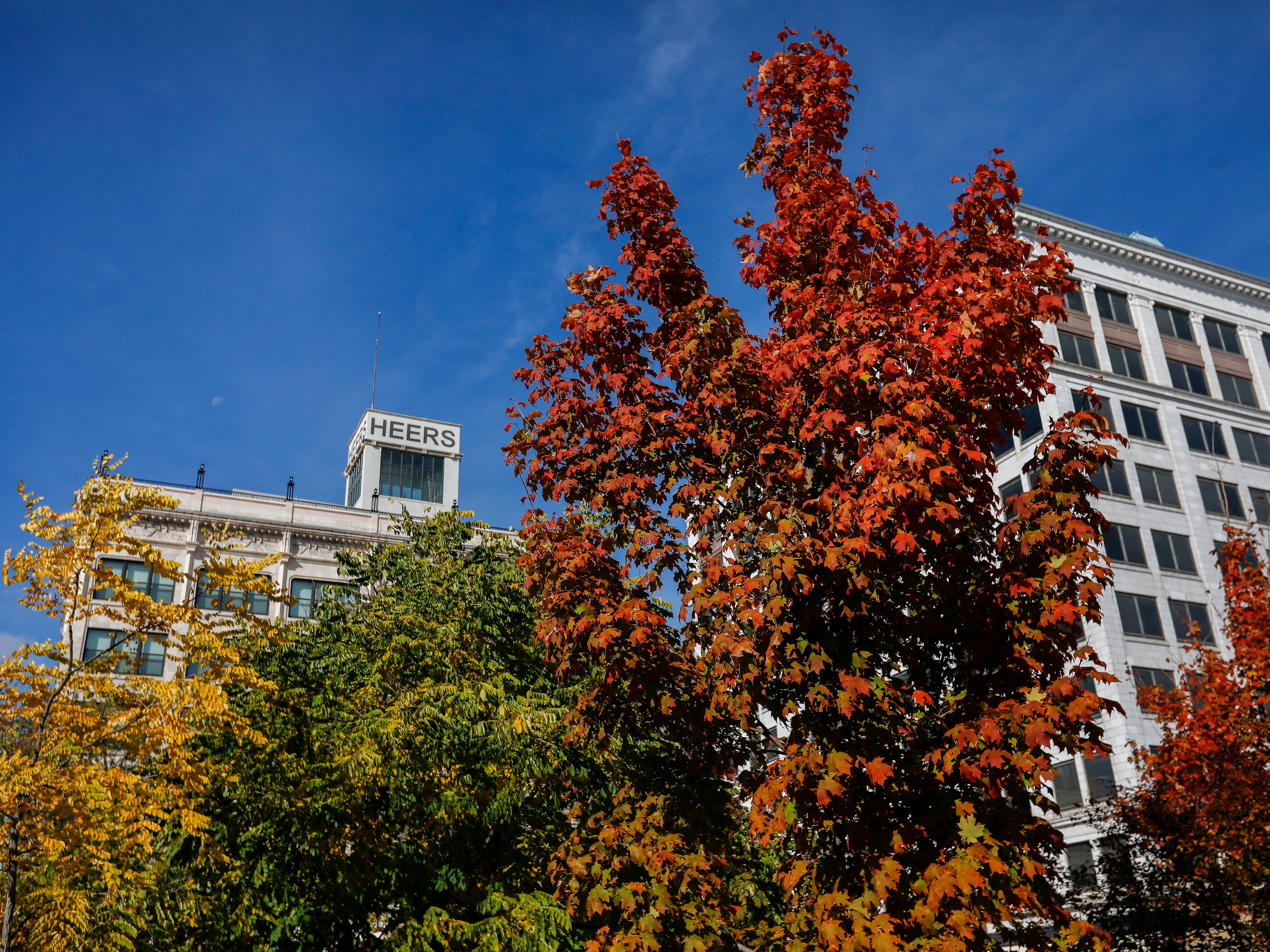 Tre trees on Park Central Square are starting to show some fall color on Tuesday, Oct. 30, 2018.