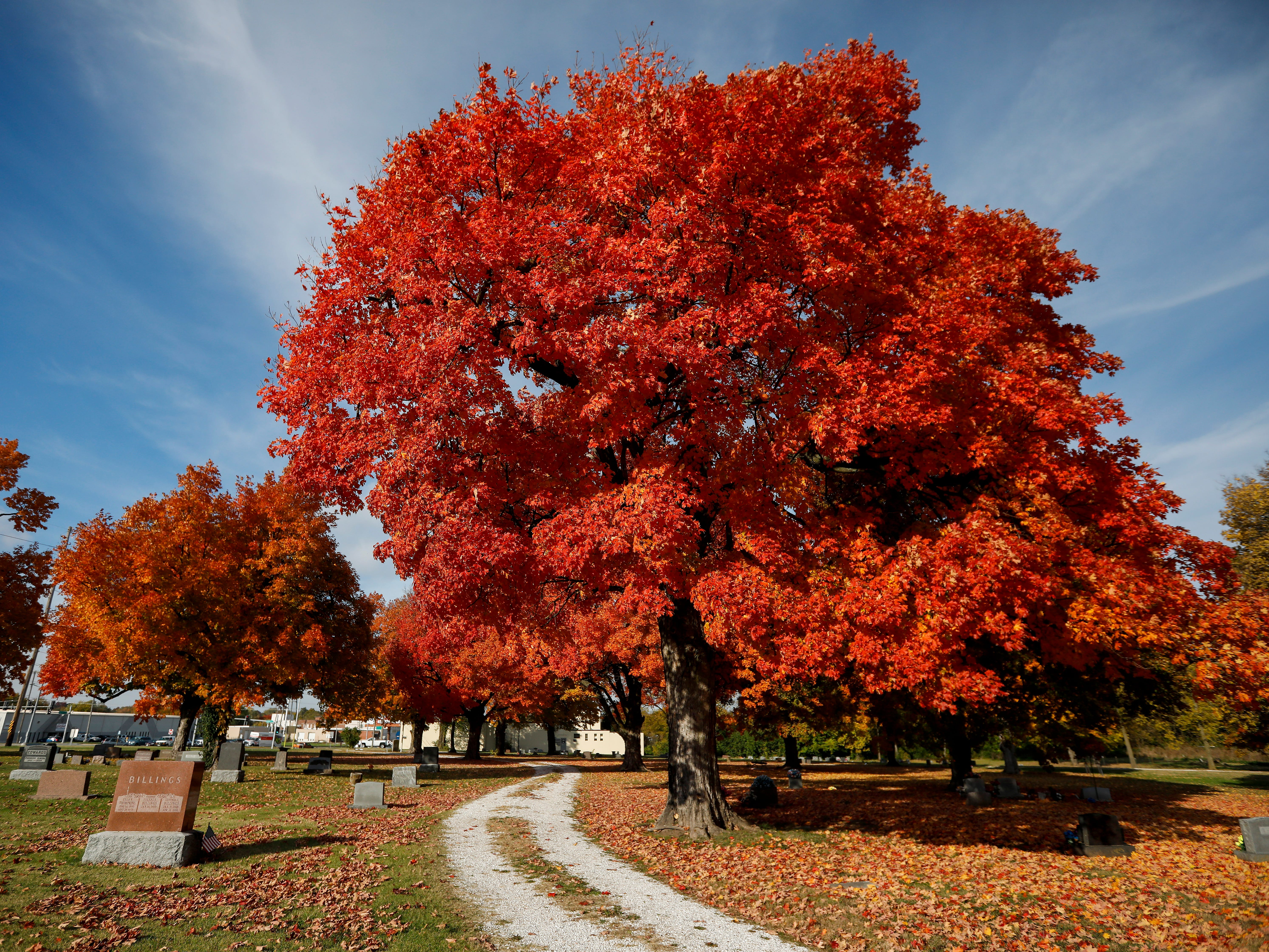 The trees are aglow with color at Lincoln Memorial Cemetery on Tuesday, Oct. 30, 2018.