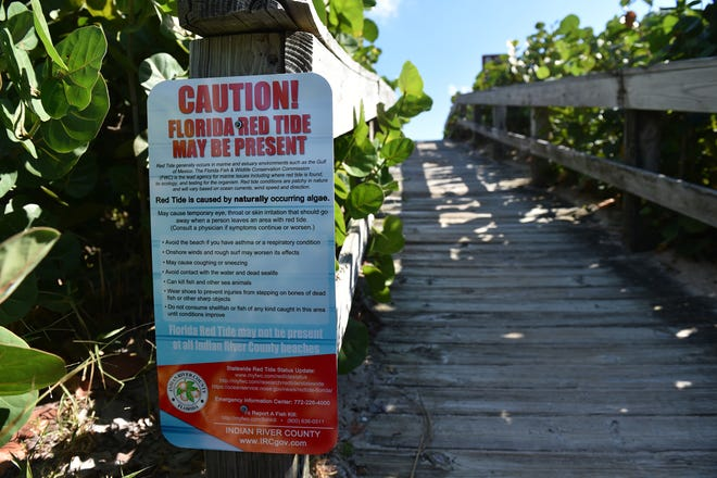 Red tide fish kill cleanup along the shoreline of Indian River County beaches on Tuesday, Oct. 30, 2018, in Indian River County.