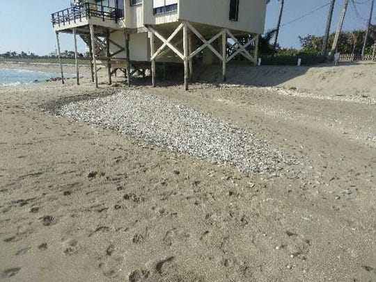 Hundreds of dead bait fish were found Tuesday morning, Oct. 30, 2018, in a drained tidal pool between Bathtub Beach and Chastain Rocks Beach in Martin County.