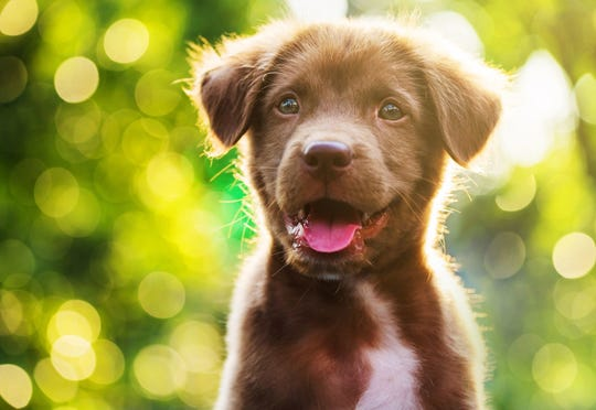 Choose from a variety of dog obedience courses at local community centers.
