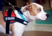 Group looks to pair NJ Dogs of Honor pup 'Gunny' with veteran