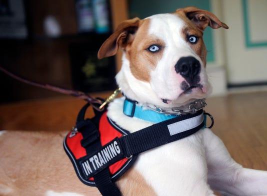 Veteran Ptsd Dog Gunny