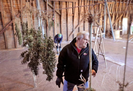 Michael Fields Agricultural Institute executive director Perry Brown laughs while hanging their harvested industrial hemp inside the barn for drying at their institute in East Troy, Wis., on Tuesday, Oct. 23, 2018.