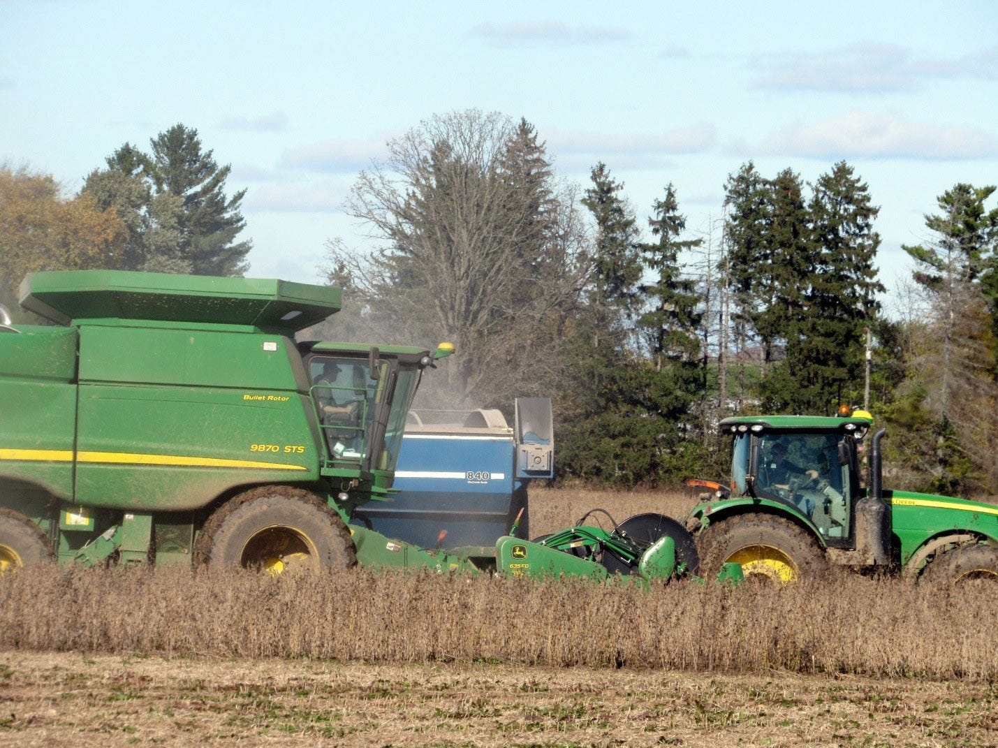 Dancing with joy at soybean harvest