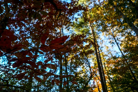 Green leaves surrender to shades of red and yellow late into fall at Cub Creek Lake in Natchez Trace State Park on Sunday, Oct. 28, 2018.