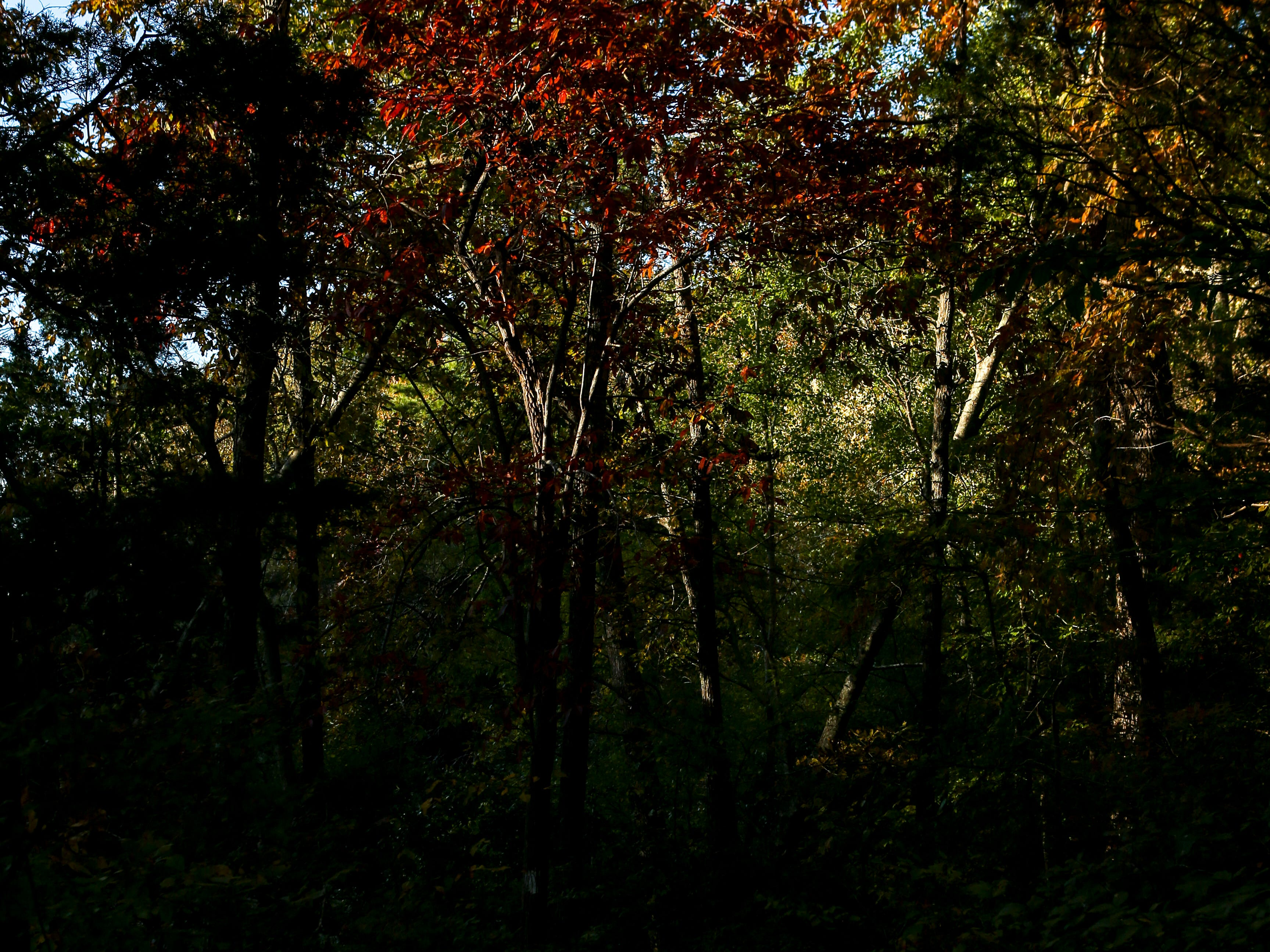 Green leaves surrender to shades of red and yellow late into Fall at Cub Creek Lake in Natchez Trace State Park, Tenn., on Sunday, Oct. 28, 2018.