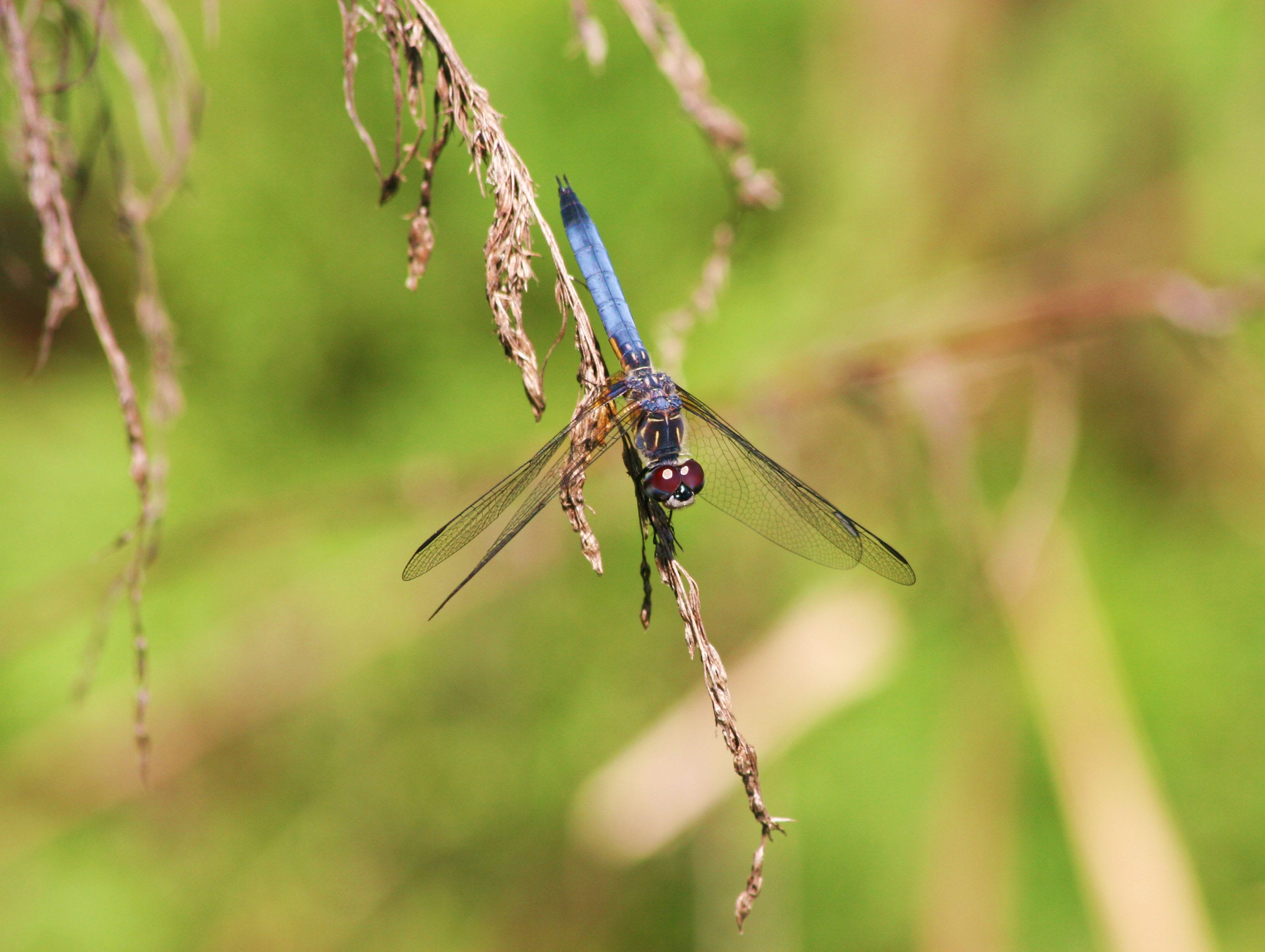 This dragonfly photo was captured by Donna Chesney.