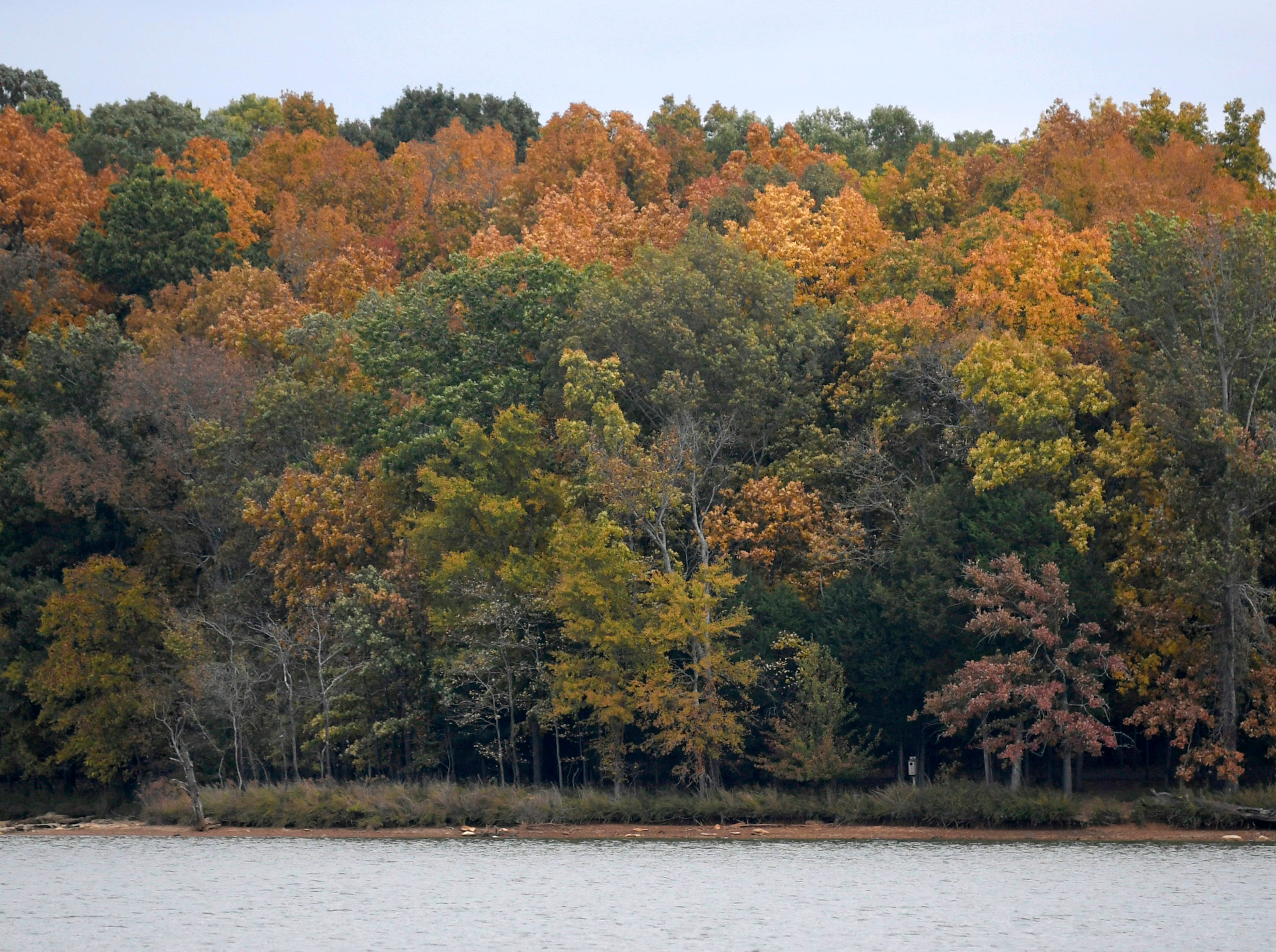 Leaves begin to change colors at Long Hunter State Park on Wednesday, Oct 31, 2018.