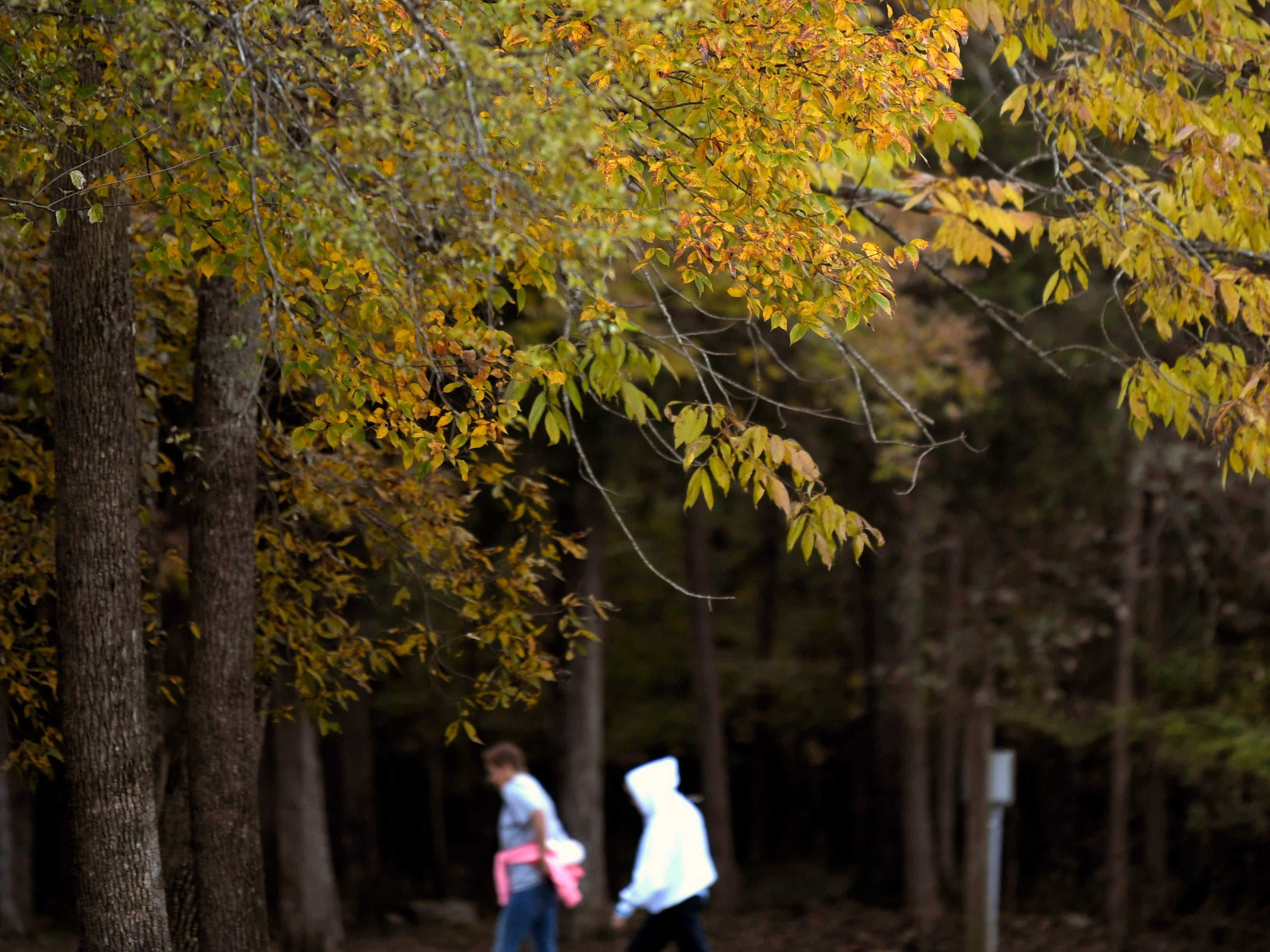Leaves begin to change colors at Long Hunter State Park on Tuesday, Oct 30, 2018.
