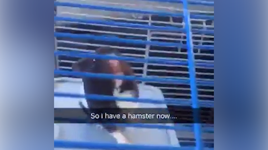 181031 Hampster 00 00 03 26 Still001