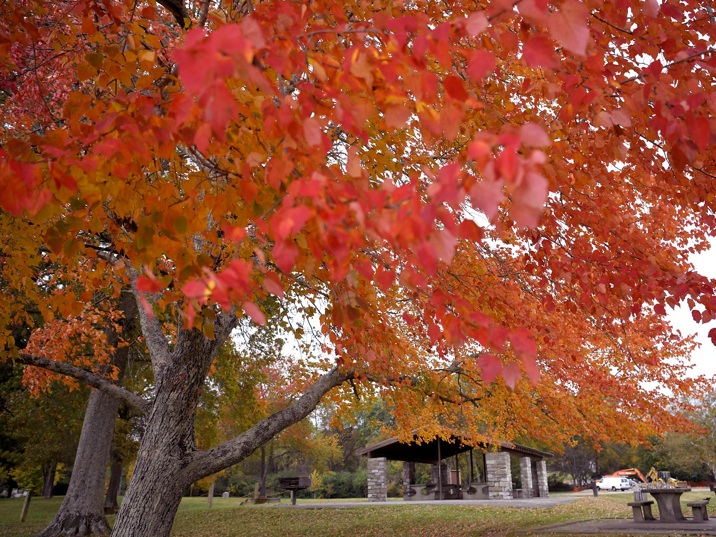 Leaves begin to change colors in a park in Gallatin on Wednesday, Oct 31, 2018.
