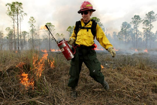 A forestry technician takes part in a controlled burn in Big Cypress National Preserve in Eastern Collier County in 2011 in this Daily News file photo. Two controlled burns earlier this past week had people smelling smoke Collier County near Immokalee Road. (David Albers/Staff)