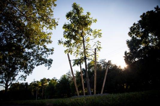 Ndn 1031 Trees 001