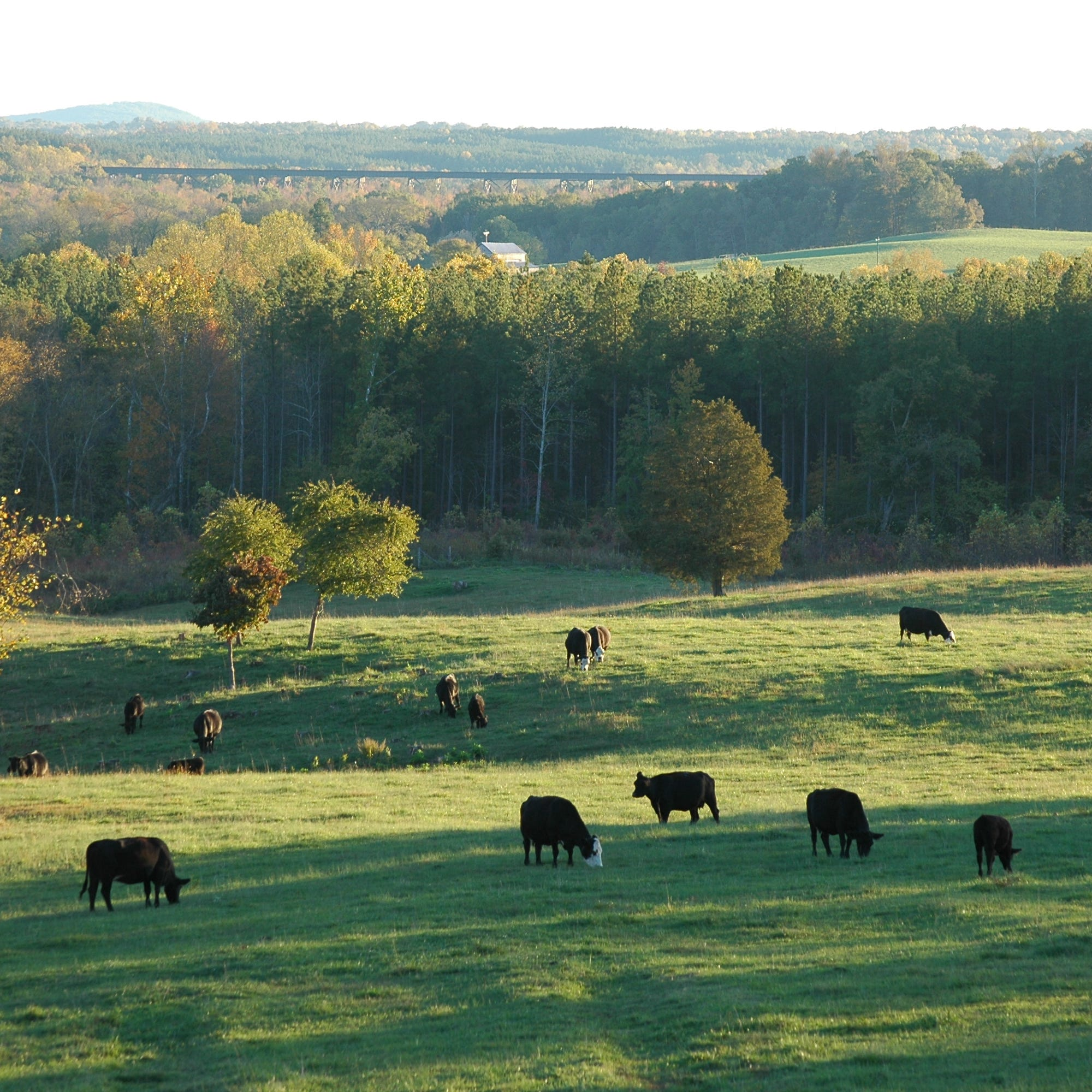 Chesapeake Bay: To keep it clean, manure matters