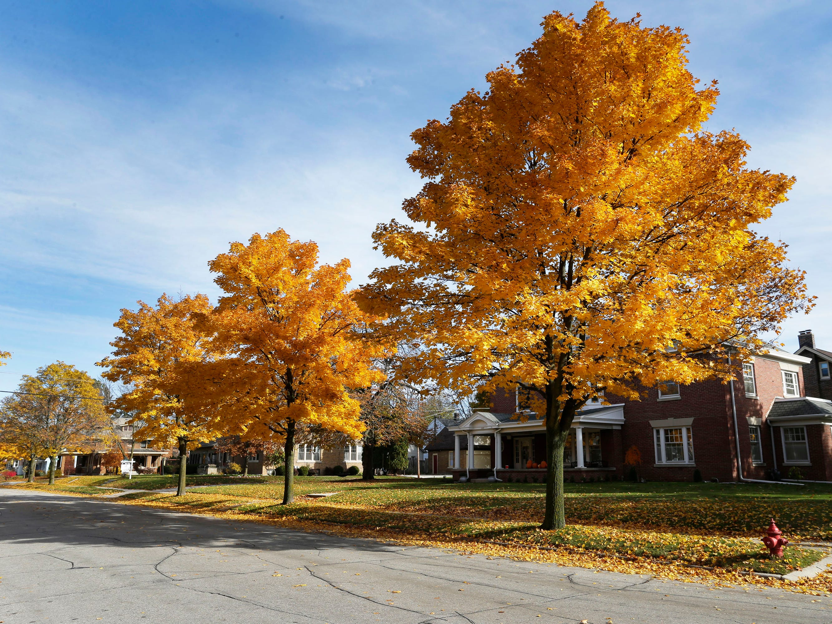 Fall color stand out like soldiers along North 4th Street near Lincoln Avenue, Wednesday, October 31, 2018, in Sheboygan, Wis.