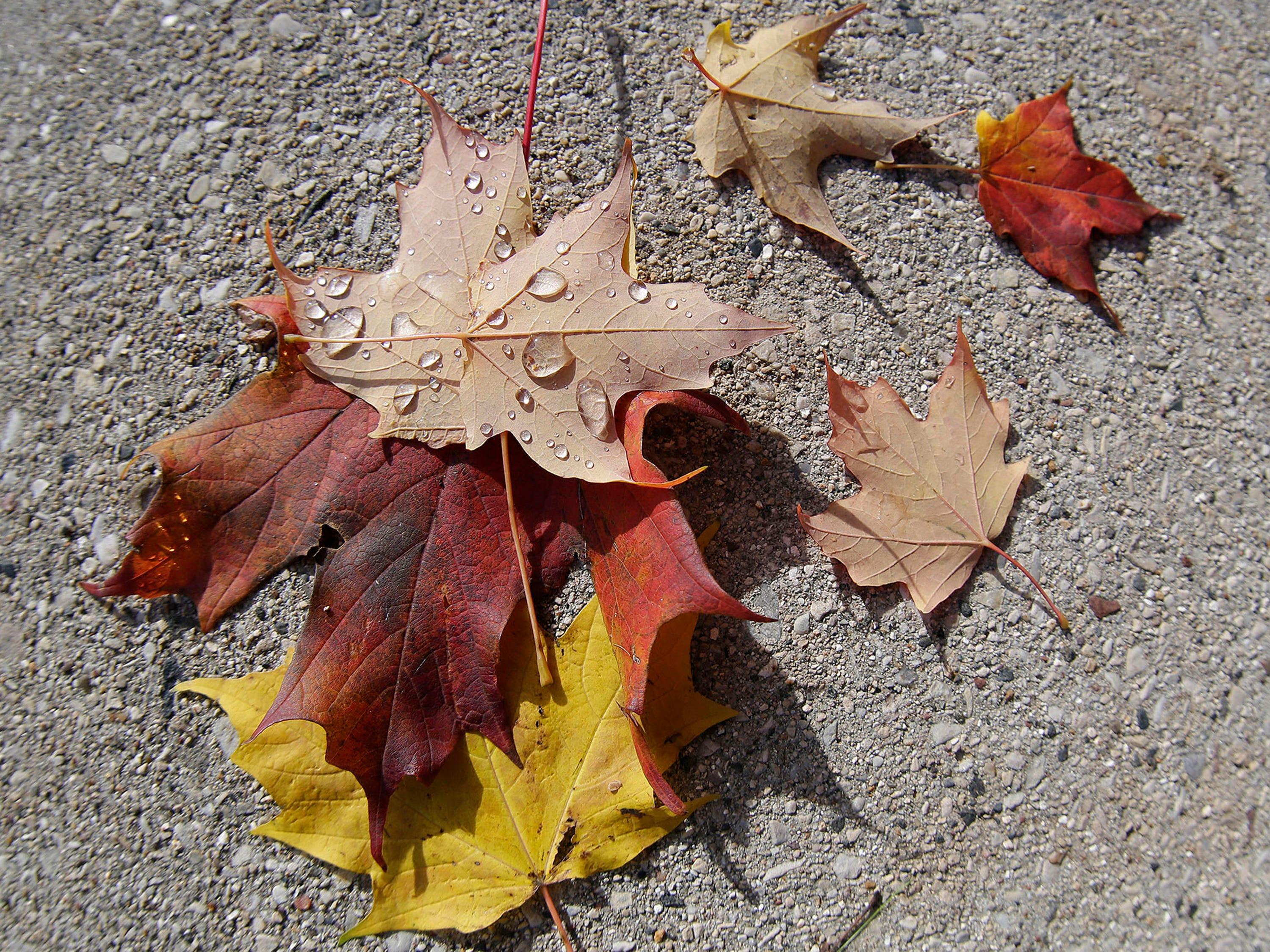 Fallen leaves on a sidewalk along Evans Avenue, Wednesday, October 31, 2018, in Sheboygan, Wis.