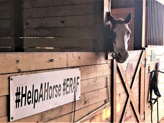 Located on 17 acres in Palm City, ERAF has grown from fostering a few horses in 2000 to a full-care facility with more than 40 horses, trailers and other equipment to support the facility. The organization has rescued more than 250 horses, mini-horses and donkeys and facilitated over 200 adoptions.