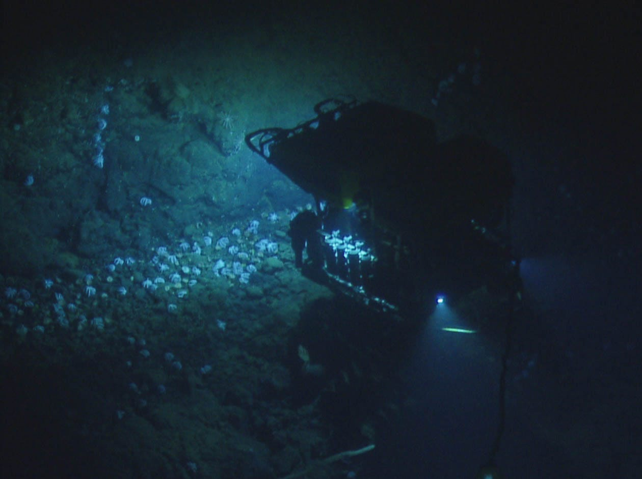 Thousands of brooding octopuses were discovered during the first dive near Davidson Seamount. This behavior had never been seen in this location before.