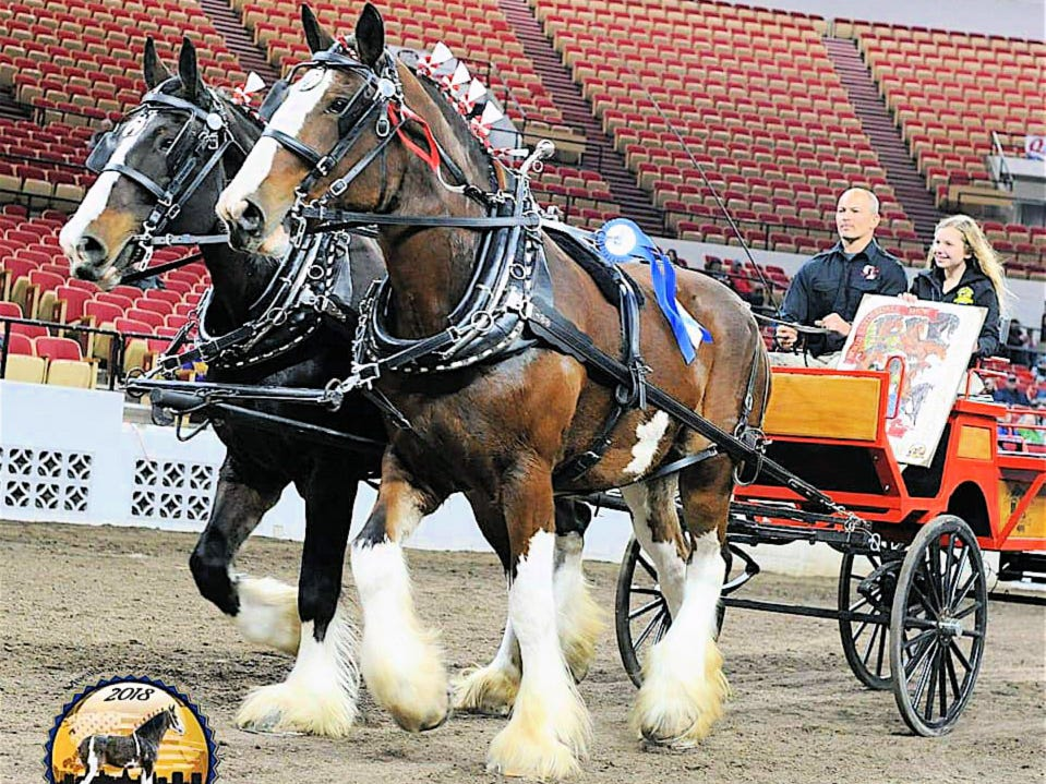 Horses, horses: big horses