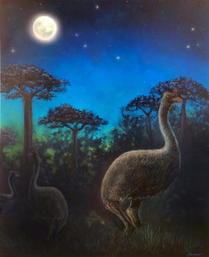 A rendering of elephant birds, which were believed to have roamed in what is now Madagascar.