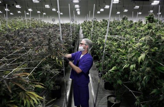 Ap Nevada Marijuana Industry Forecast A File F Usa Nv