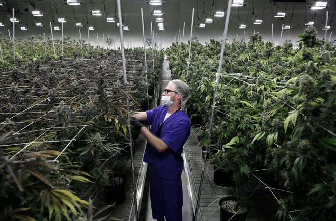 Marijuana farm in Las Vegas.