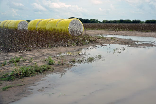 Heavy rains over the past 60 days have delayed summer crop harvests and winter crop plantings. Here, cotton bales wait to be moved from a field with standing water in South Texas.