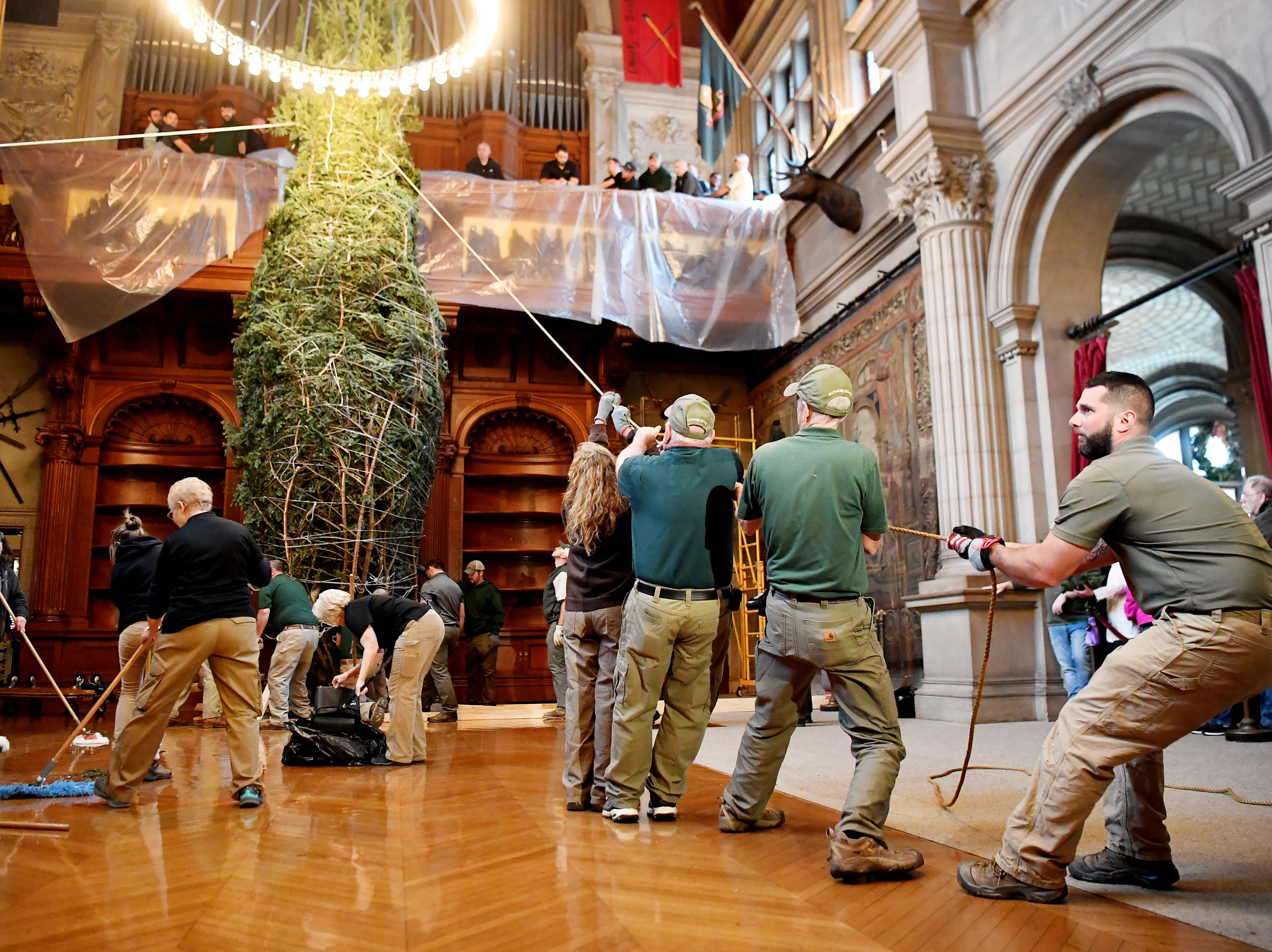 A team of about 50 employees from various departments raised the Biltmore's banquet hall Fraser fir Christmas tree Nov. 1, 2018.