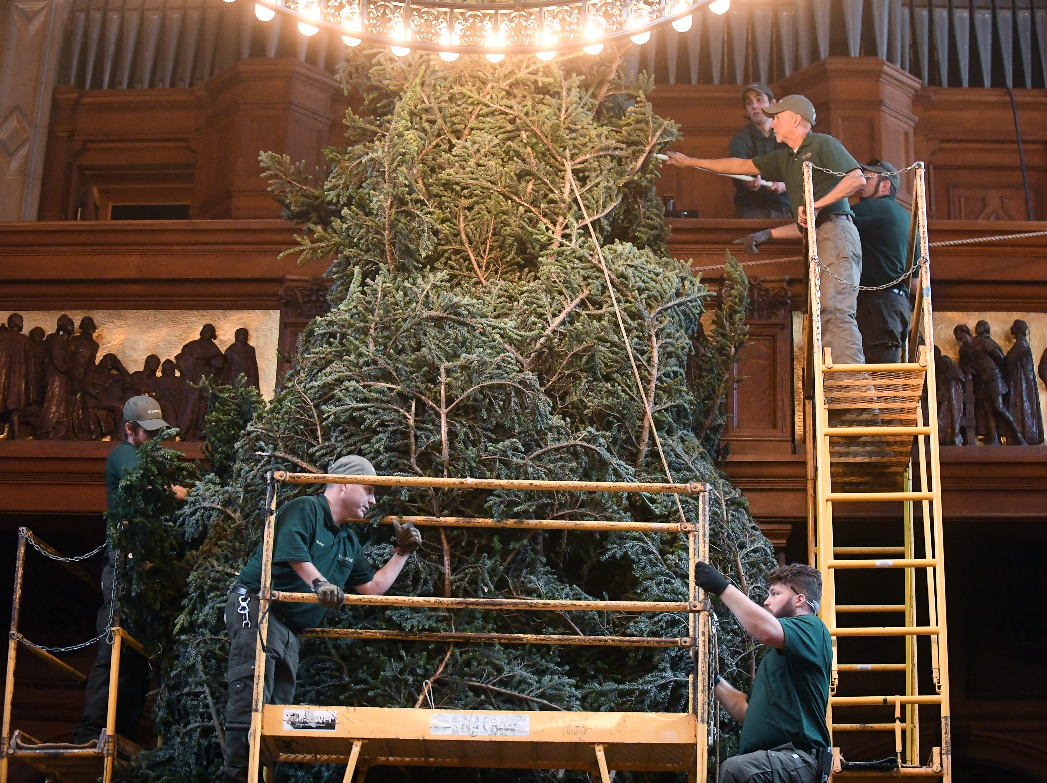 A team of about 50 employees from various departments raised the Biltmore's Christmas tree, a Douglas-fir, in the banquet hall Nov. 1, 2018.