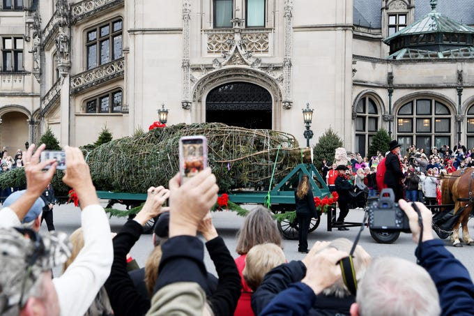 People raise their phones and cameras to get a photo of the Biltmore's banquet hall Christmas tree Nov. 1, 2018.