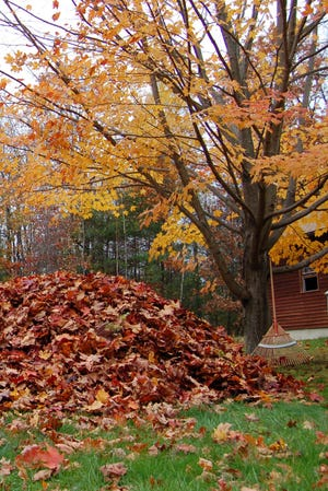 Leaves can be a great source of nutrients for your lawn and garden.