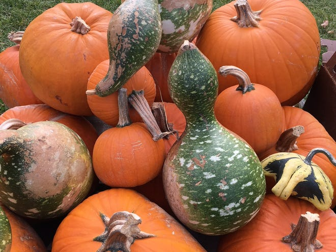 The key to a good birdhouse gourd is picking the right shape.