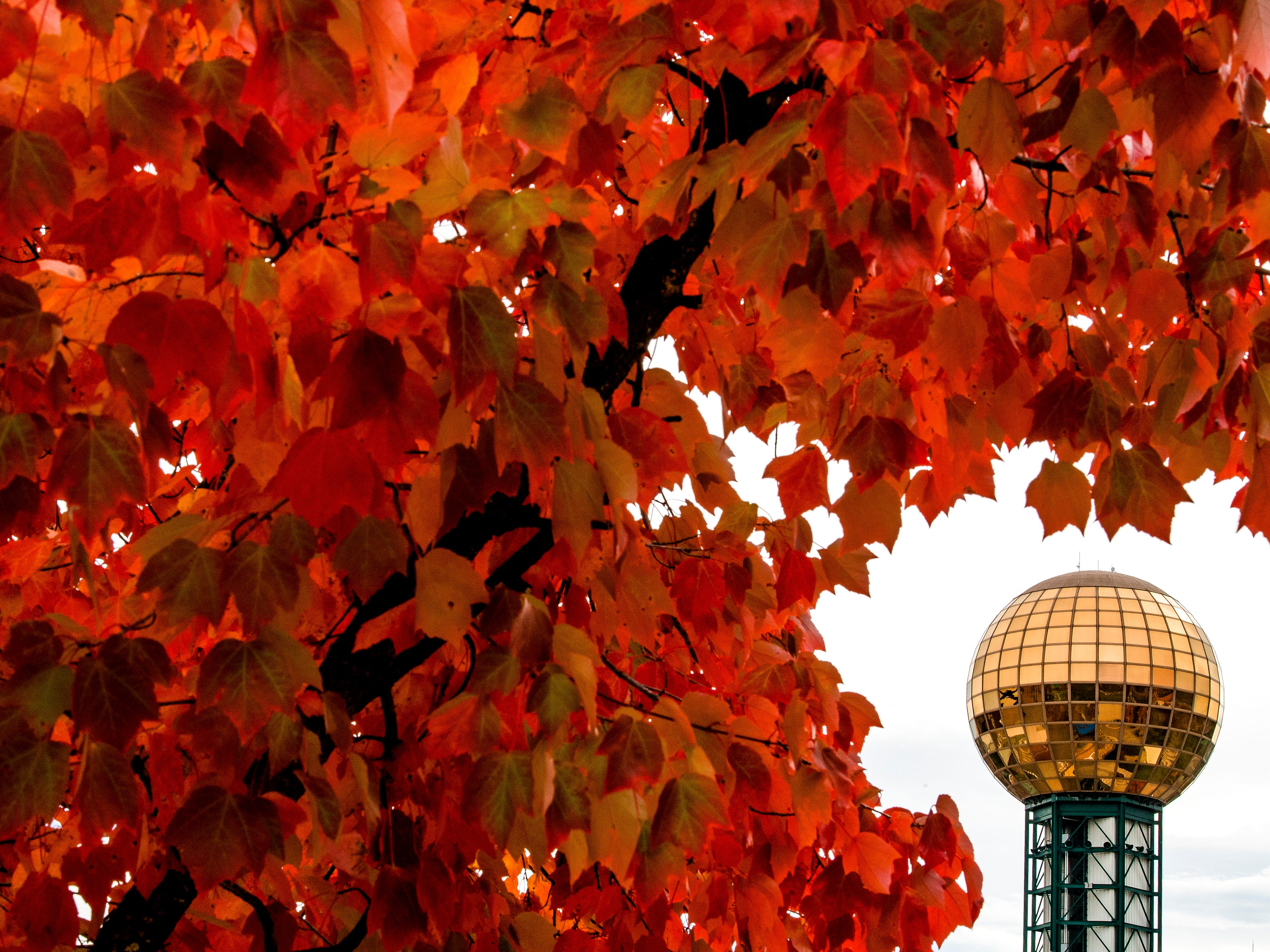The Sunsphere is framed by the red leaves of a tree standing by the Knoxville Museum of Art on Thursday, November 1, 2018.