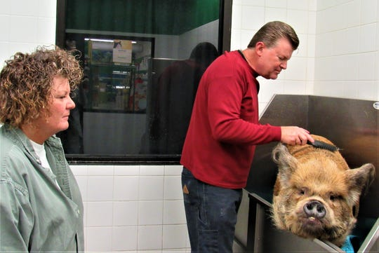 Michelle Reimert and Scott Tucker take Spoon for a bath every two weeks at Pet Supplies Plus.  After her bath Spoon walks across the street to Panera for a treat.