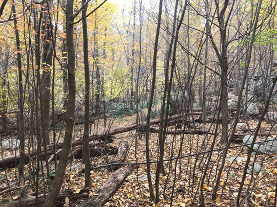 Trails snake through a dense forest near Lake Hopatcong's Liffy Island in Jefferson Township on Nov. 1, 2018.
