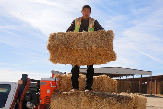Tyler Becenti, a bean plant laborer for Navajo Agricultural Products Industry, unloads hay bales on Thursday for a traffic barricade being set up for Customer Appreciation Day at the company's farm south of Farmington.