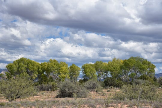 Cottonwoods thrive in an irrigated flat along the route.