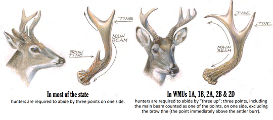 A look at different antler requirements for buck hunters across the state.