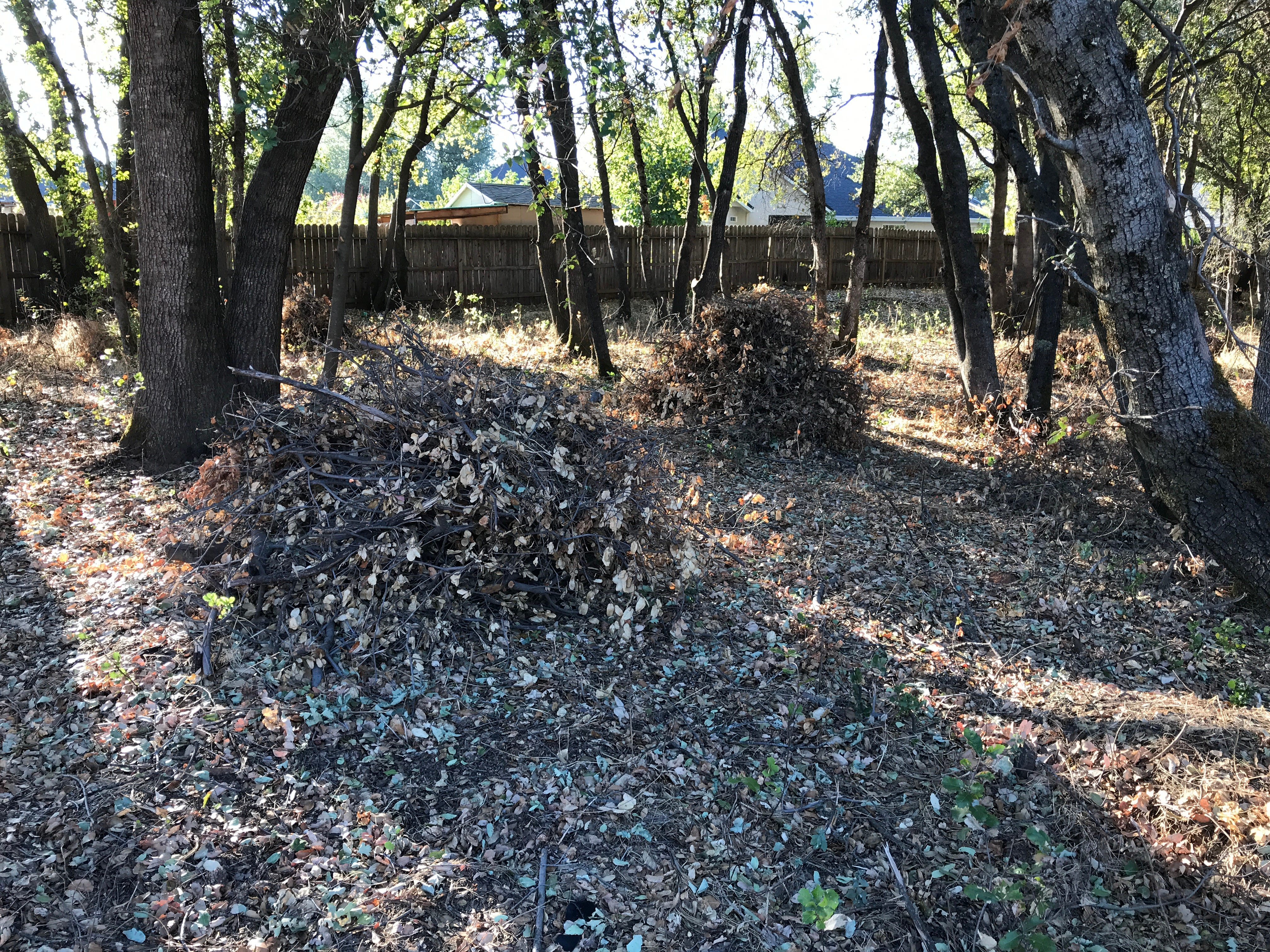 Brush piles sit at an 11-acre plot of city-owned open space off Goodwater Avenue and Penrod Way following a brush-clearing project.