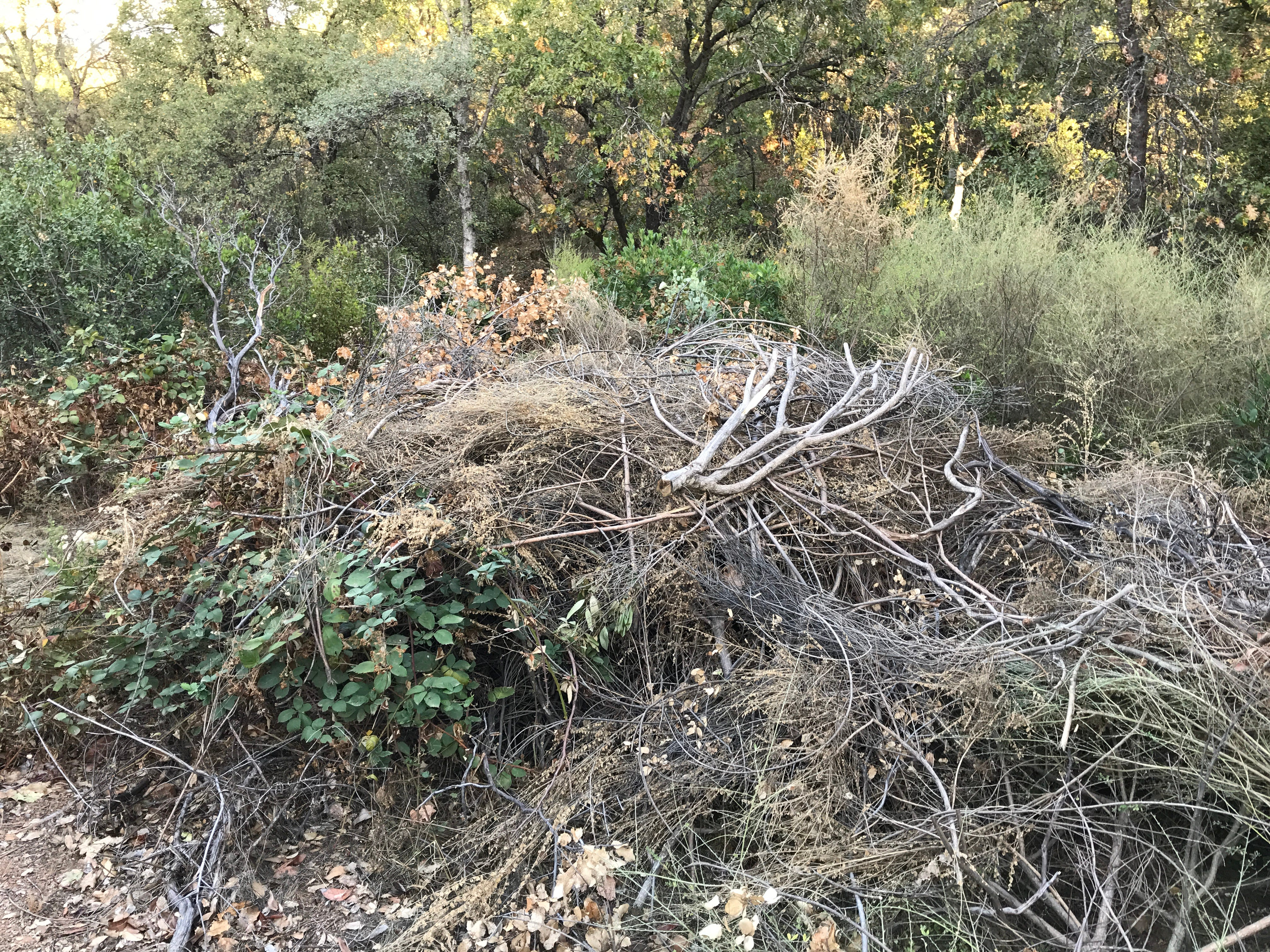 A large pile of brush and tree trimmings sit in open space near Palatine Court in Redding. Redding Fire Marshal Craig Wittner says the material apparently came from a nearby home, dumped there by a resident or landscaper.