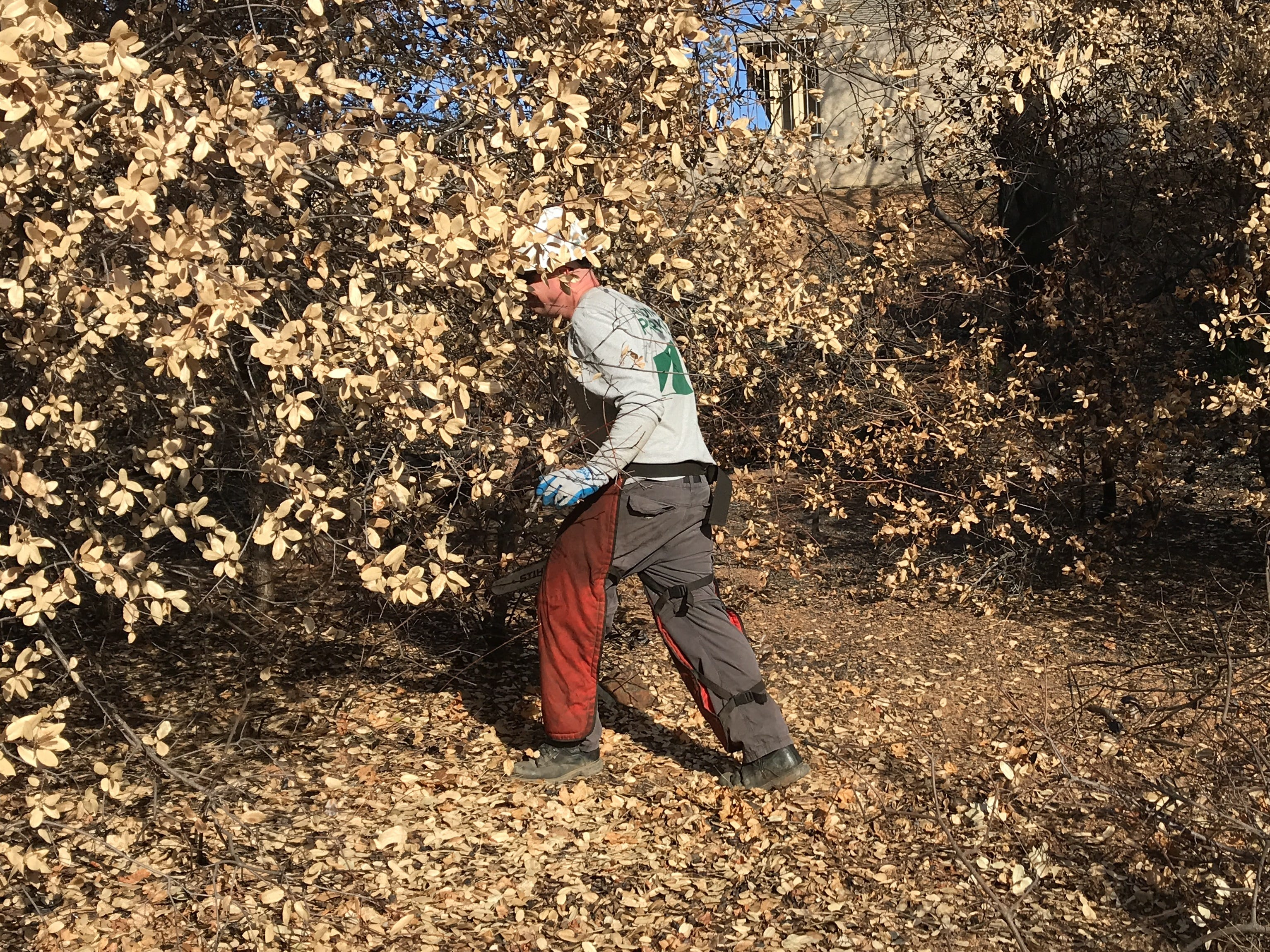 A city of Redding parks employee uses a chainsaw to thin out brush on a hillside in the Mary Lake subdivision on Oct. 26. The city worked with nearly 60 students from Bethel Church's School of Supernatural Ministry on a brush-removal project.
