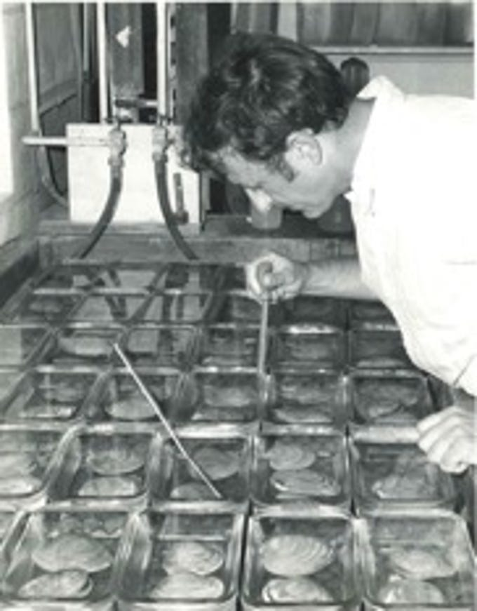 This undated photograph shows research taking place at VIMS Eastern Shore Laboratory in Wachapreague, Virginia.