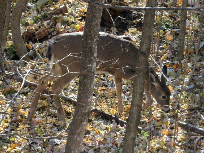 Hunters need to remember that deer are often active during mid-day periods.