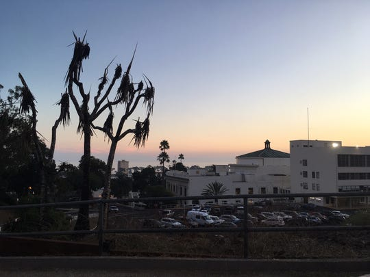 Near the entrance to the Ventura Botanical Gardens, a scorched tree is a visible reminder of the Thomas Fire.