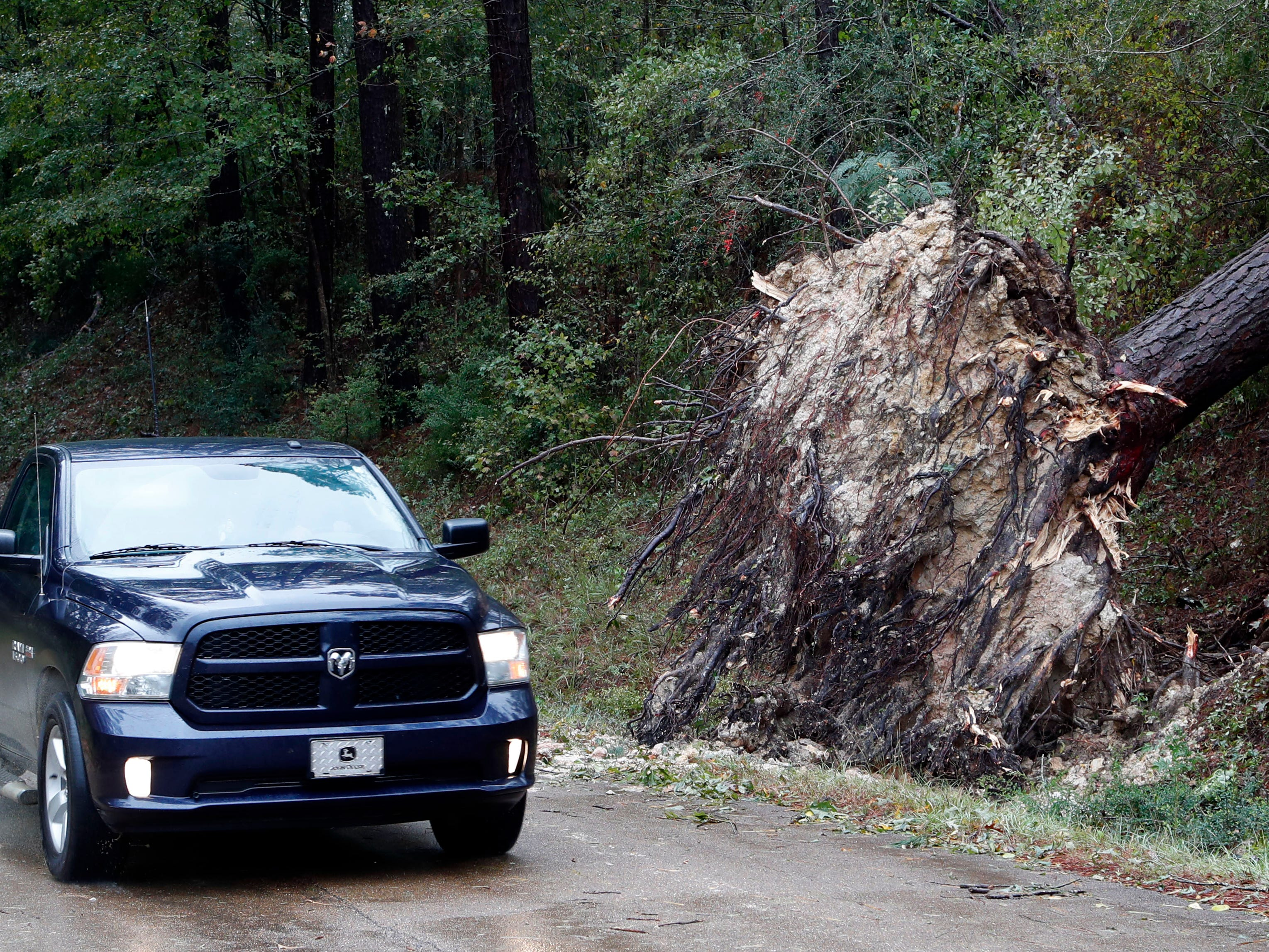 A truck passes by a recently fallen tree in Roxie, Miss., following a strong storm.